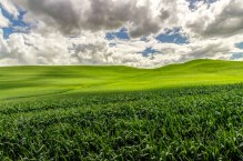 Palouse-grass-and-sky