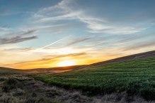 Palouse-green-sunset