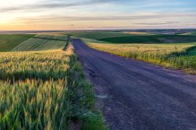Palouse-Wheat-Road-Sunset