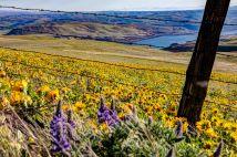 Gorge Flowers - Wide open Aperture, focus far