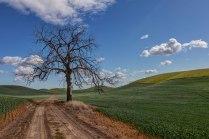 Lone-Tree-1