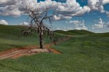 Lone-Tree-2